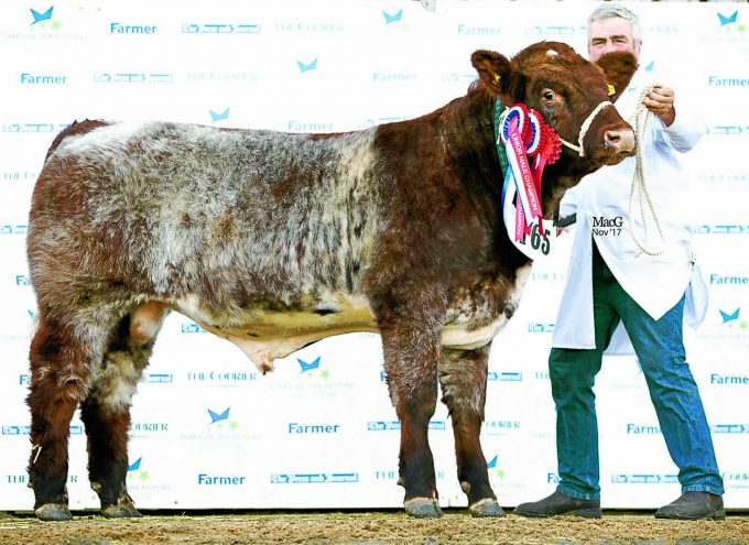 JUST CHAMPION . . . Thomson, Roddick and Laurie's Shawhill Leroy was named overall Shorthorn Junior Champion at the prestigious national Stars of the Future Calf Show