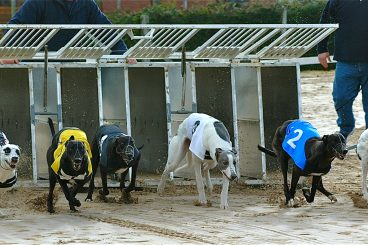 Greyhounds: Jetski powers ahead in sprint trip