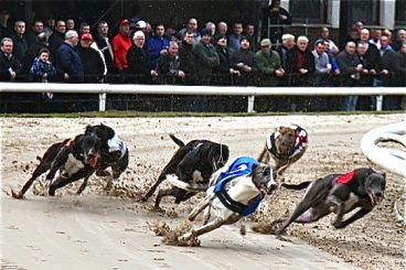 GREYHOUNDS: Outsider Rosie's surprise victory
