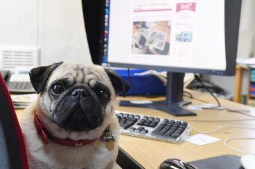 A Pug's life – a day in the life of a news hound