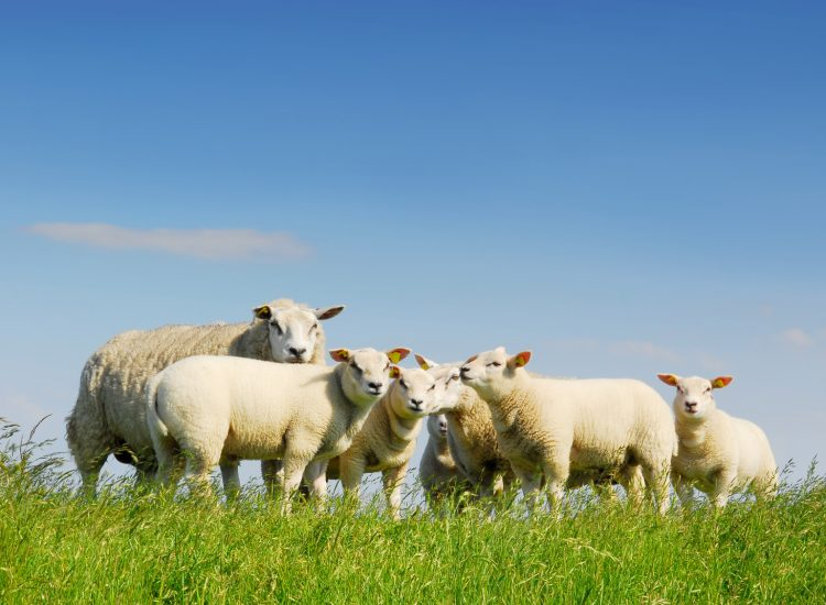 Change needed in the wool market