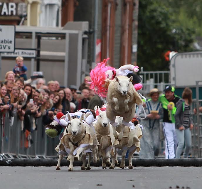 Baaa-rmy sheep race delivers on fun