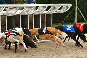 GREYHOUNDS: Dexter's four-way victory delight