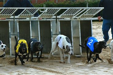 GREYHOUNDS:  Brothers' Long Tom triumph