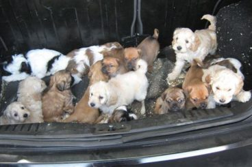 Puppies seized at port
