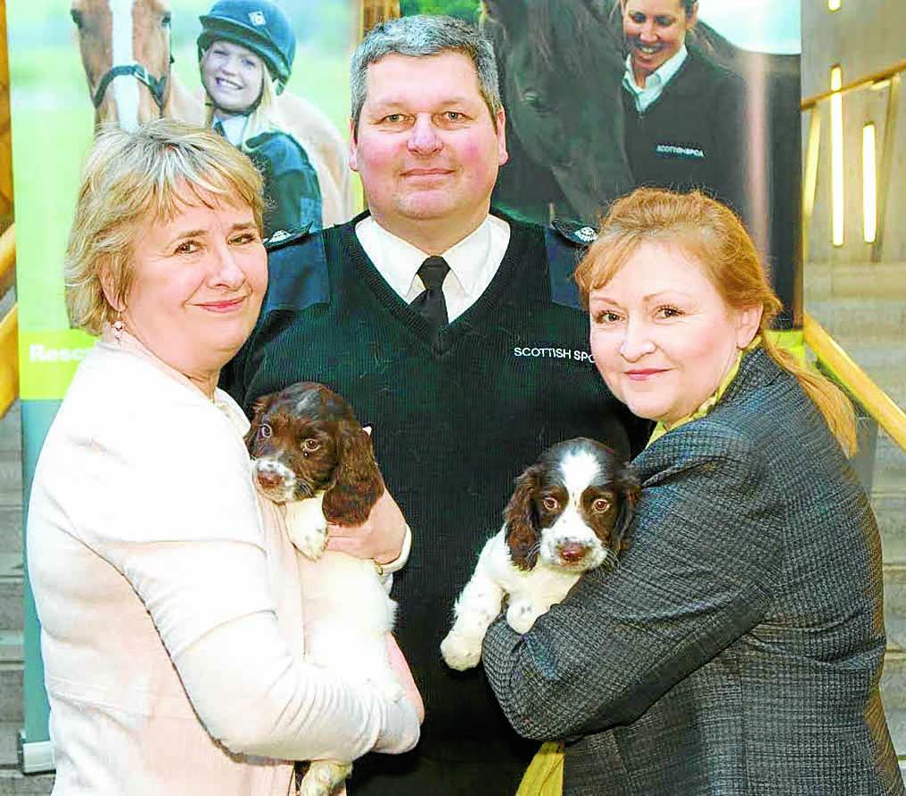 Puppy trafficking plea