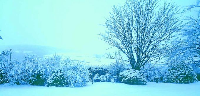GARDEN . . . Cheryl Smith sent this in from Ae