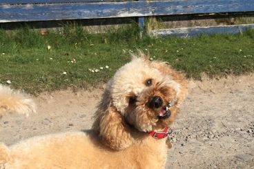 15 photogenic pets in Dumfries and Galloway