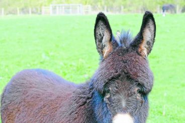 Ghost horse pops up in donkey photo – can you see it?