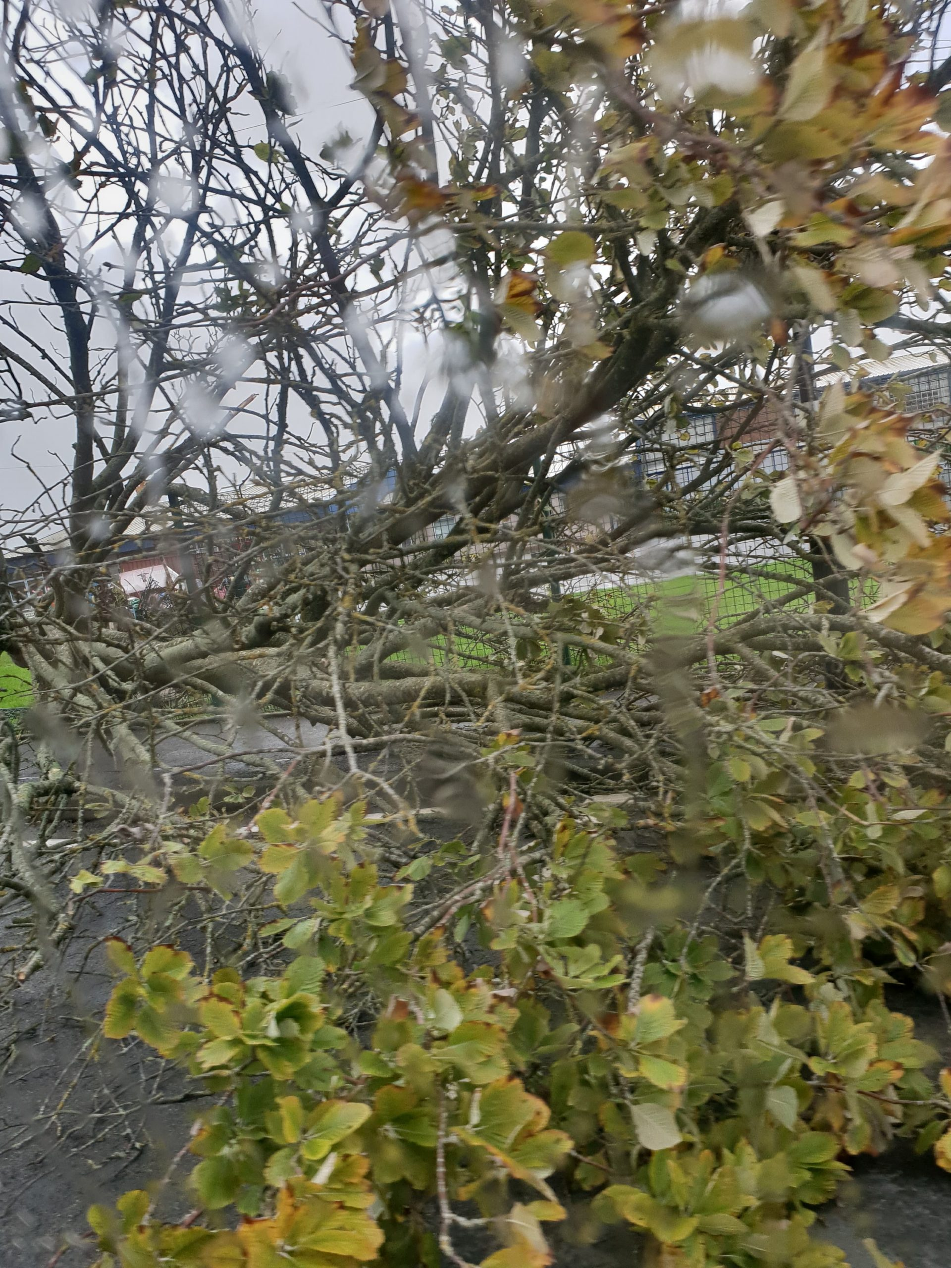 Tree felling concerns addressed