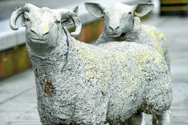 Town statues are looking sheepish