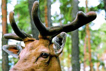 Driver deer warning