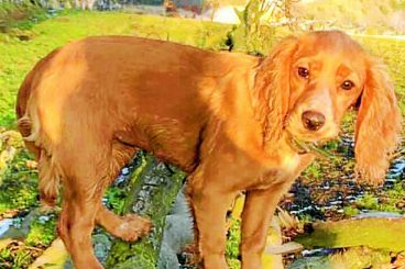 £6k reward for missing puppy