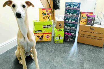 Donations flood in for four-legged friends