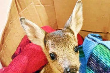 Wildlife charity in fawn alert