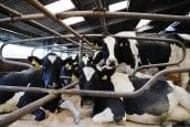 Digital dairy project wins funding