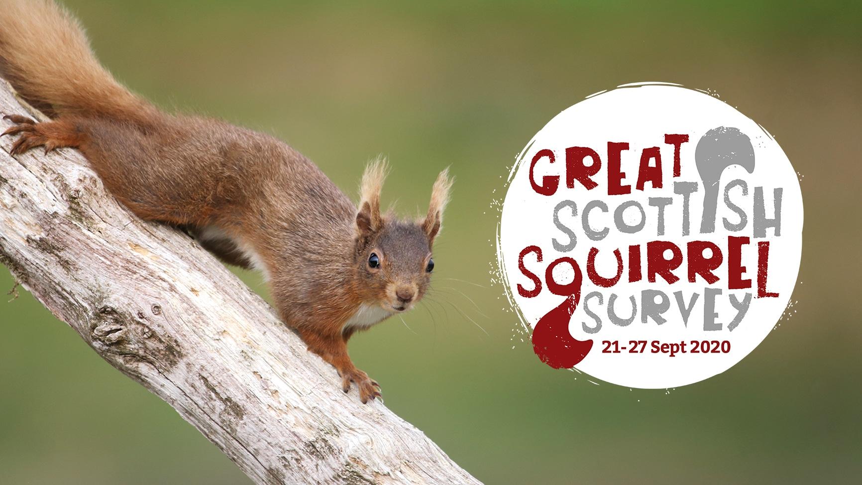Get squirrel spotting