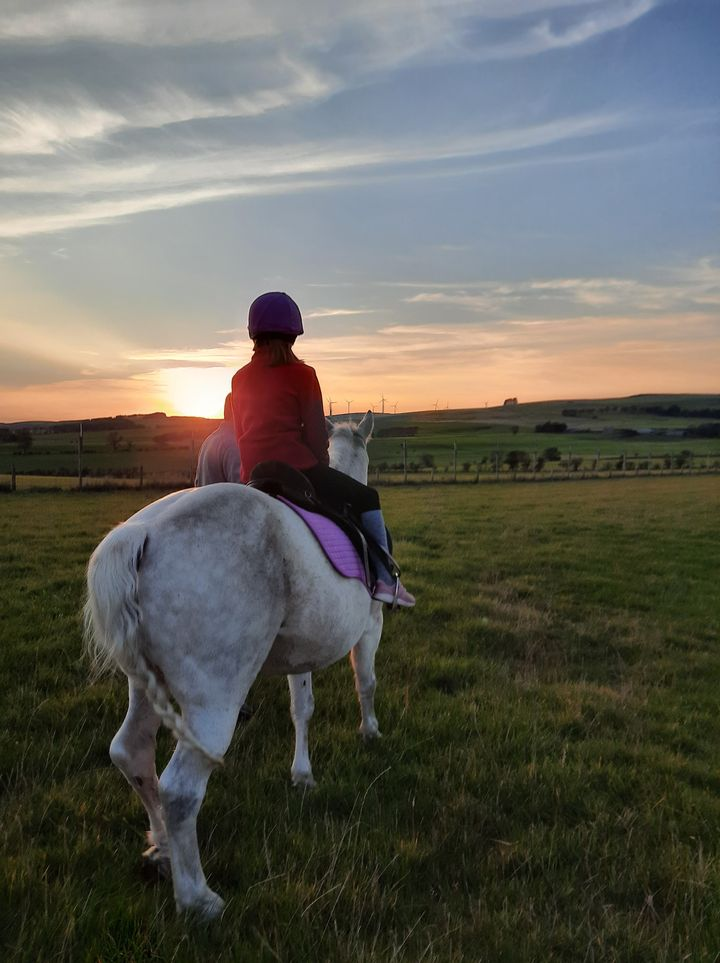 Honey B and me: adventures with a pony