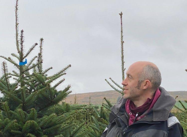 Xmas tree farmer harvests success