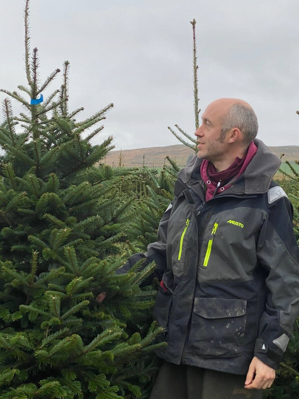 Xmas tree farmer harvests success