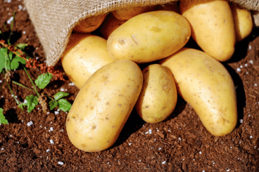 Brexit deal blow for seed potato firm
