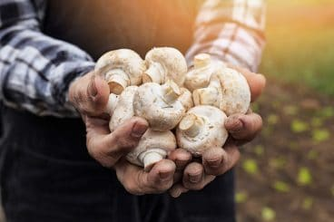 Mushrooming opportunities for farmers