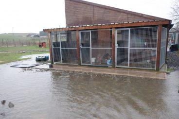 Floods threaten animal hospice