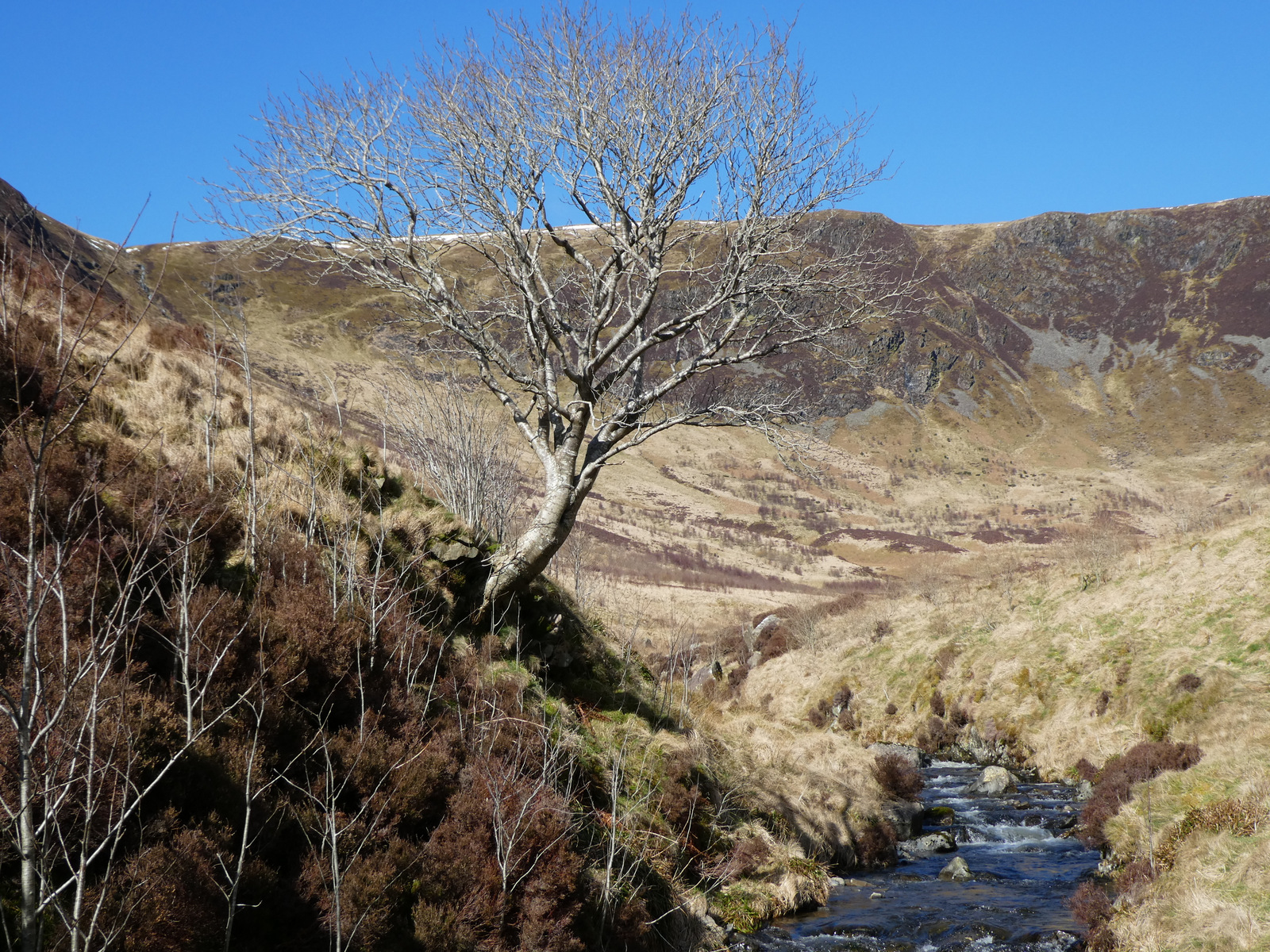 Moffat tree named 11th most astounding in Europe