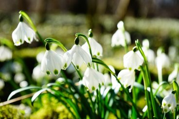 Community trust welcomes spring at loch