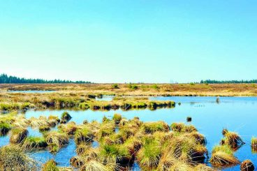 Bogs to be the focus of Galloway Glens event