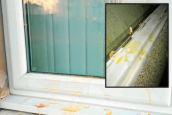 Gretna houses egged in vandalism spate