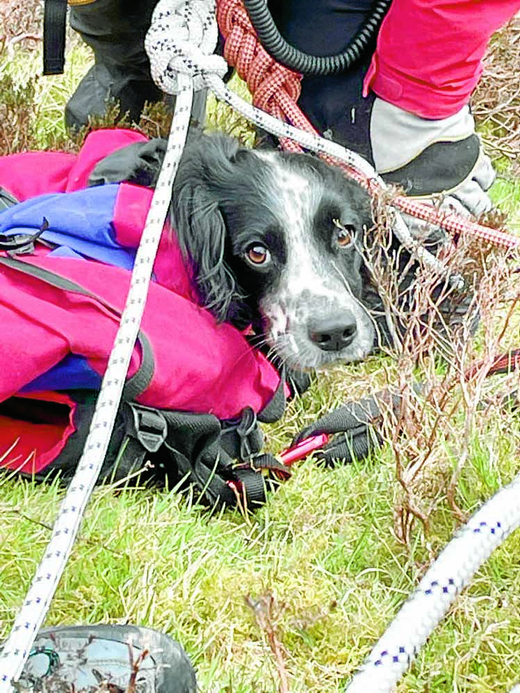 Happy ending after dog falls at beauty spot