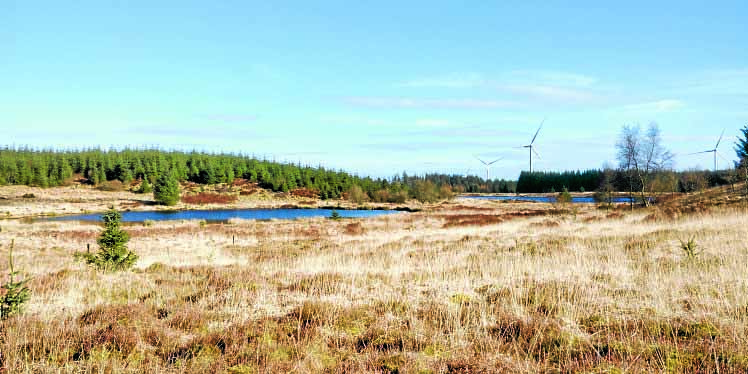 Forestry view sought