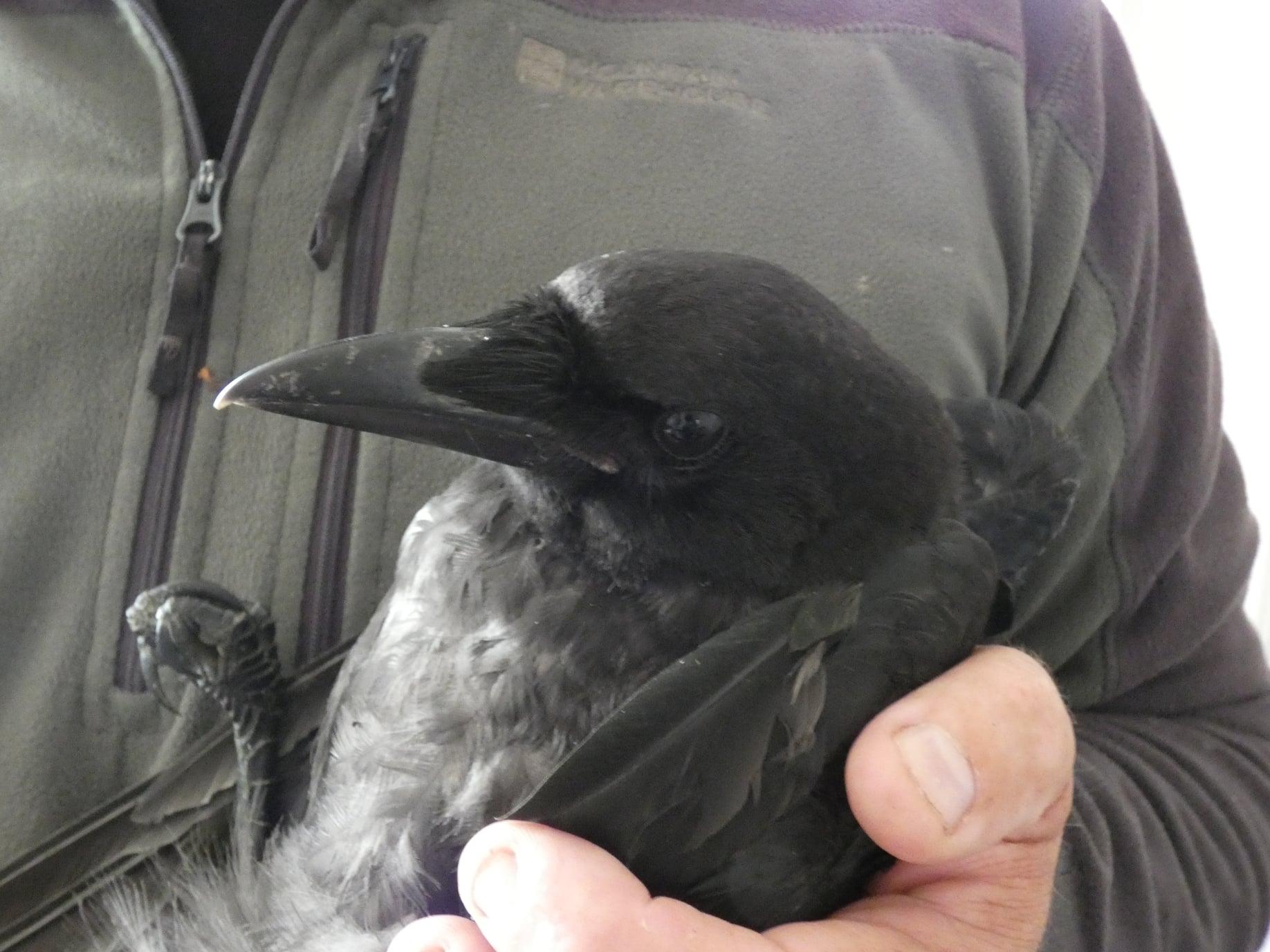 Loch litterers slammed following crow death