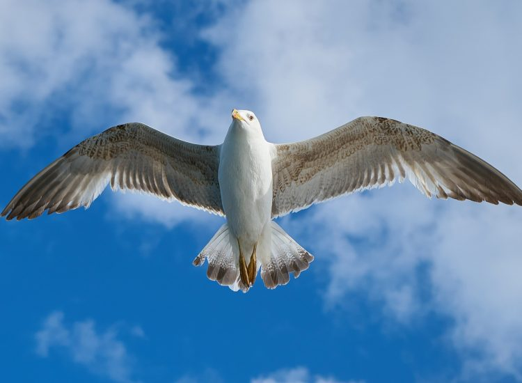 Action call on gull problem