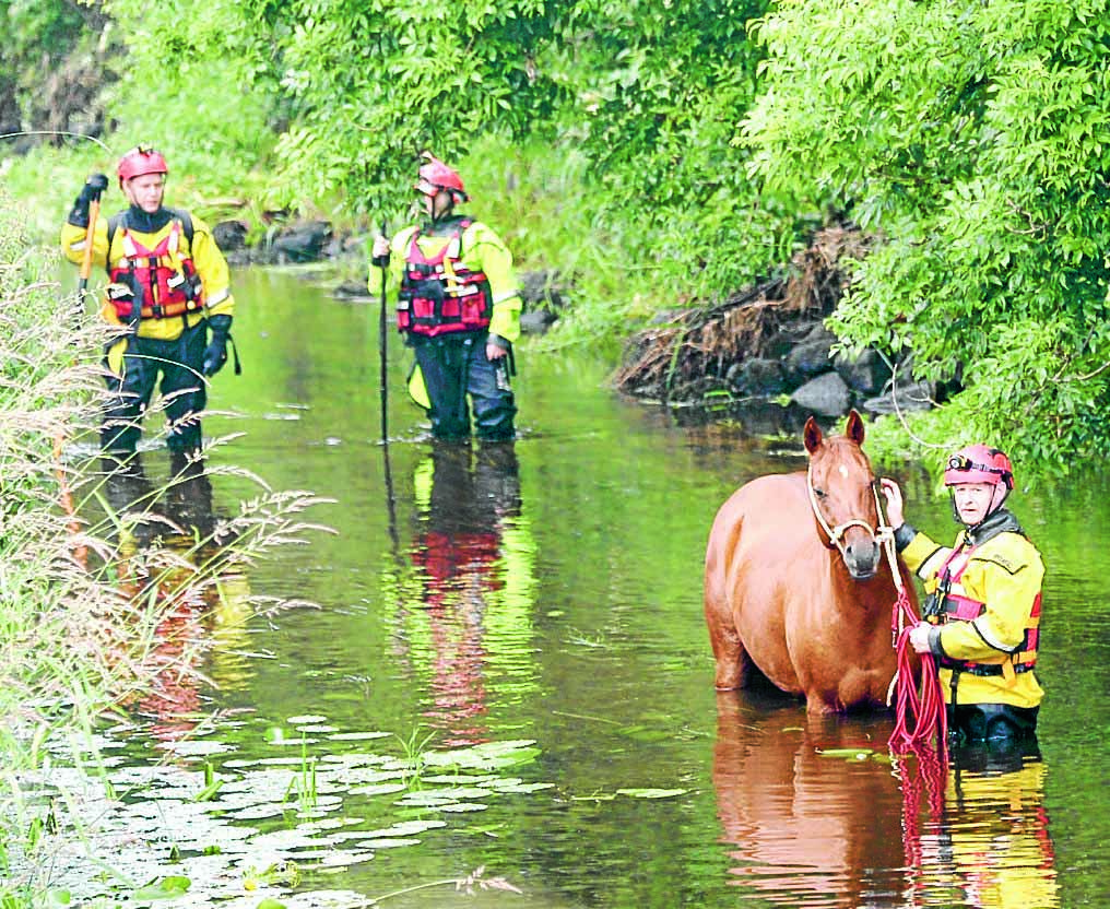 Happy ending to horse river rescue