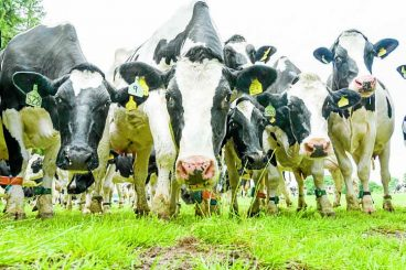 £21m dairy project could be 'gamechanging'