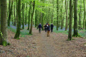 New woodland festival hits region
